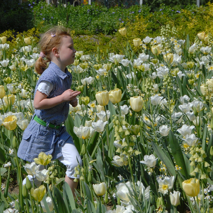Flower bulbs are everywhere at Fluwel's