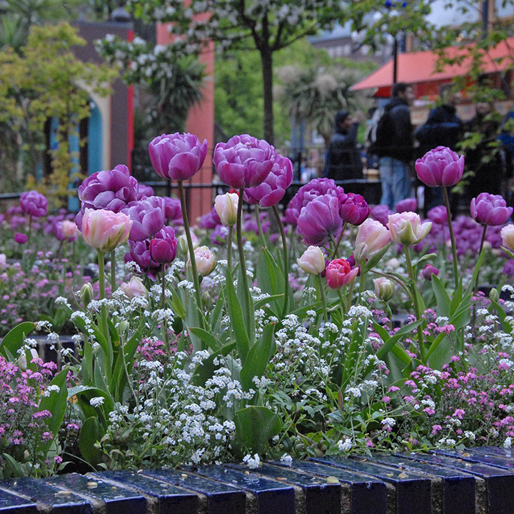 Tulips in all colours